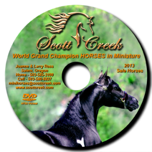 2013_DVD_Label